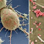 Вируси на СПИН напускат клетката, в която паразитират
