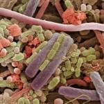 Бактерии върху езика на човек