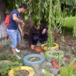 В старите гуми посадихме билки