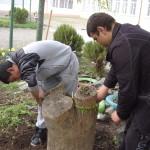 В старите дънери посадихме декоративни треви